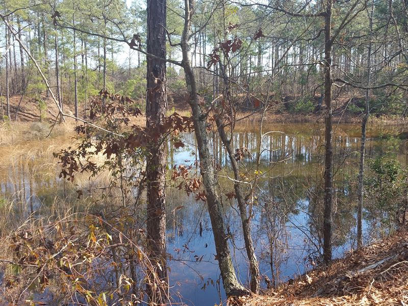 White Pond South Tract : White Pond : Aiken County : South Carolina