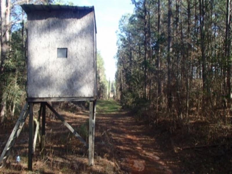 24.8 Acres In Jasper County : Paulding : Jasper County : Mississippi