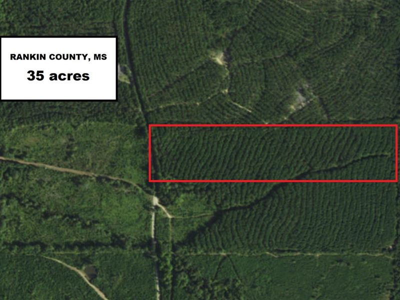 Multi-Use Tract : Braxton : Rankin County : Mississippi