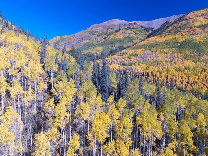 Milford Mining Claim : Lake City : Hinsdale County : Colorado