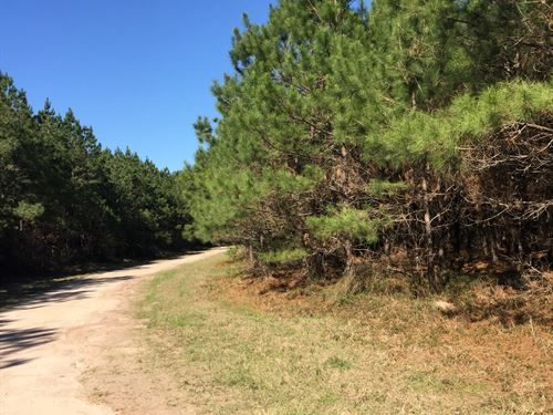 42 Ac On Us Highway 287 : Corrigan : Trinity County : Texas
