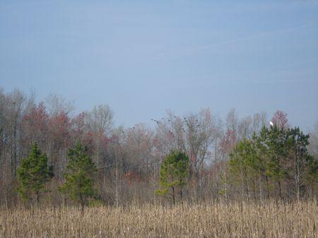 Blue Wing Plantation Tract B : Bennettsville : Marlboro County : South Carolina