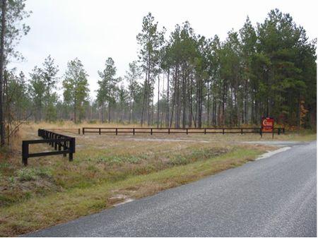 Penny Creek Tract : Walterboro : Colleton County : South Carolina