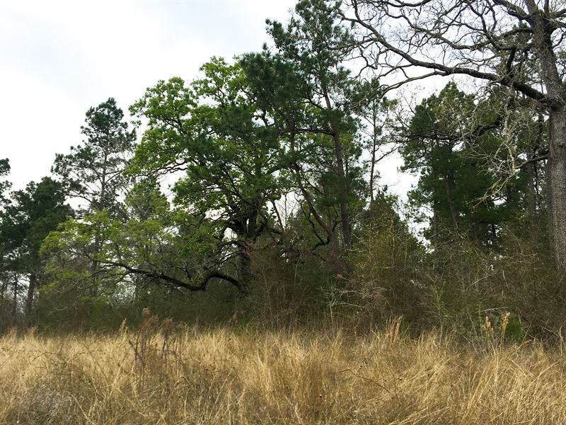 24 Ac Wilderness Road : Point Blank : San Jacinto County : Texas