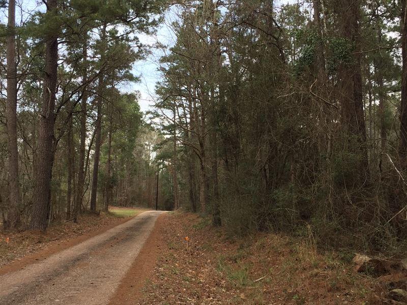 114 Ac Jordan Road : Point Blank : San Jacinto County : Texas