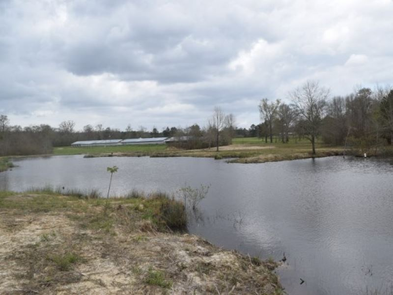 93 Acres With 3 Ponds And Creek : Tylertown : Walthall County : Mississippi