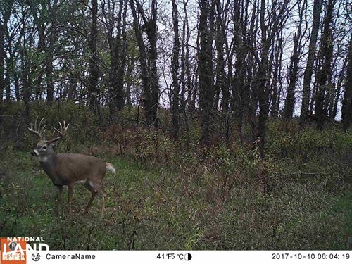 Trophy KS Whitetails With Income : Eskridge : Wabaunsee County : Kansas