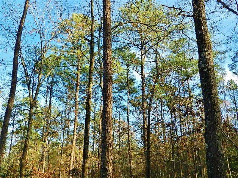 Carswell Estate Sealed Bid Sale : Irwinton : Wilkinson County : Georgia