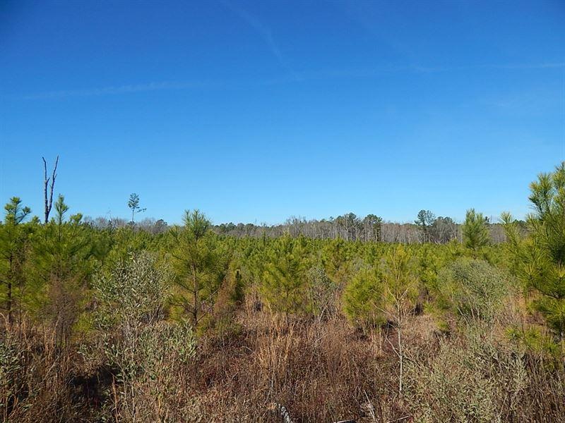 Timber Investment / Hunting : Warrenton : Warren County : Georgia