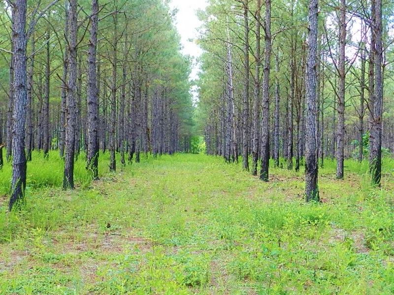 Excellent Timber Investment & : Gordon : Twiggs County : Georgia