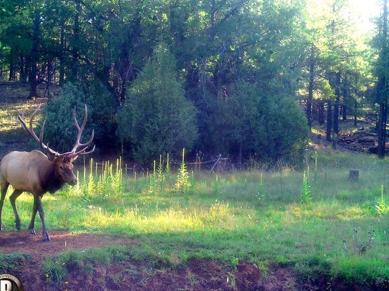 Jensen Ranch : Grants : Cibola County : New Mexico