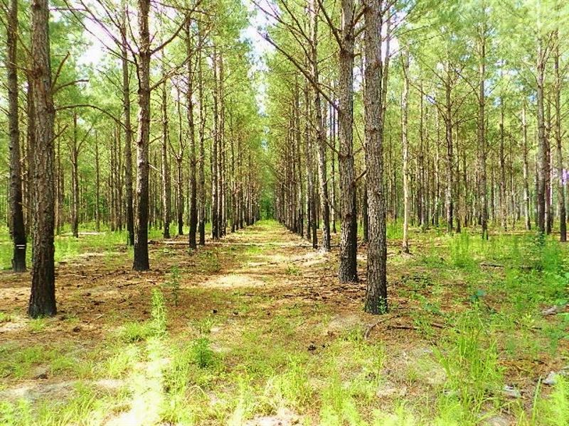 Ga Timberland Investment : Wrightsville : Johnson County : Georgia