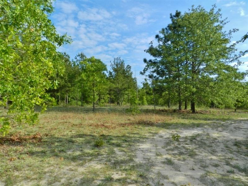 Timber/Hunting/Homesite/Reduced : Gordon : Wilkinson County : Georgia