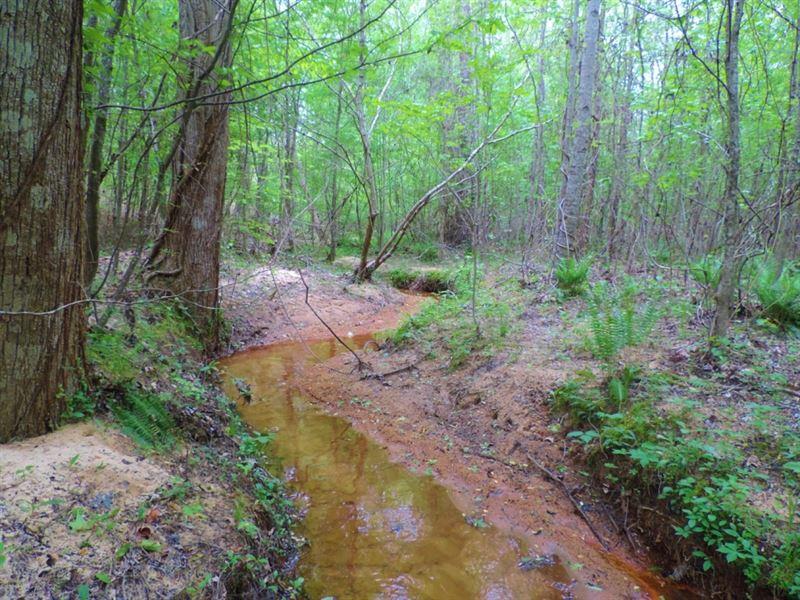 Pine Timber/ Creek Bottom : Washington : Wilkes County : Georgia