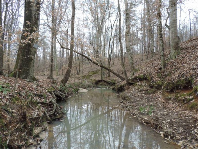Price Reduced/ Creek Frontage : Crawfordville : Taliaferro County : Georgia