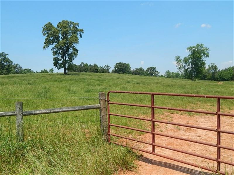 Clarks Creek Cattle Farm : Martin : Stephens County : Georgia