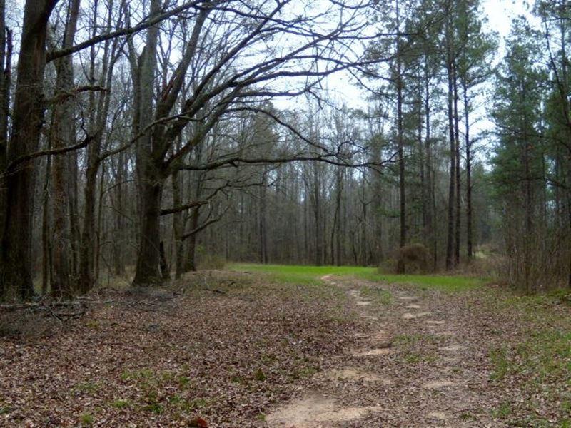 Sugar Creek Tree Farm-Reduced. : Madison : Morgan County : Georgia