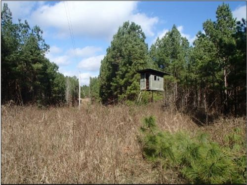 80 Acres In Webster County : Stewart : Webster County : Mississippi
