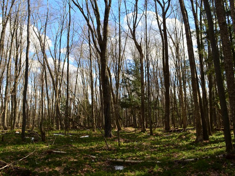 Wooded 160 Acres With Easement : Caroline : Shawano County : Wisconsin