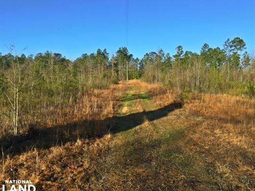 Tibbie Recreation & Hunting Tract : Tibbie : Washington County : Alabama