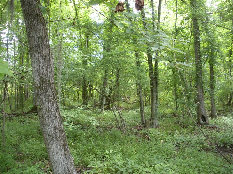 Camden Alabama Hunting : Camden : Wilcox County : Alabama