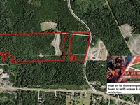 102 Ac - Timber Land & Hunting : Newton : Newton County : Texas