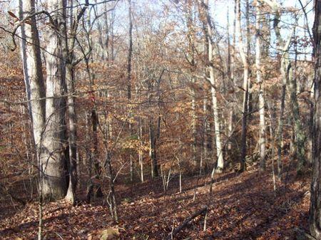 Pine Hollow Tract : Walhalla : Oconee County : South Carolina