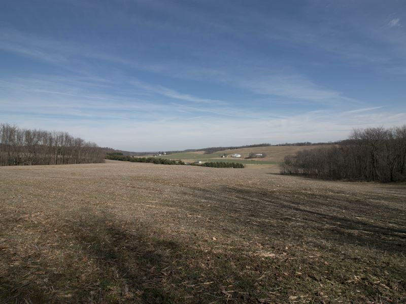Tr 905 - 31 Acres : Perrysville : Ashland County : Ohio