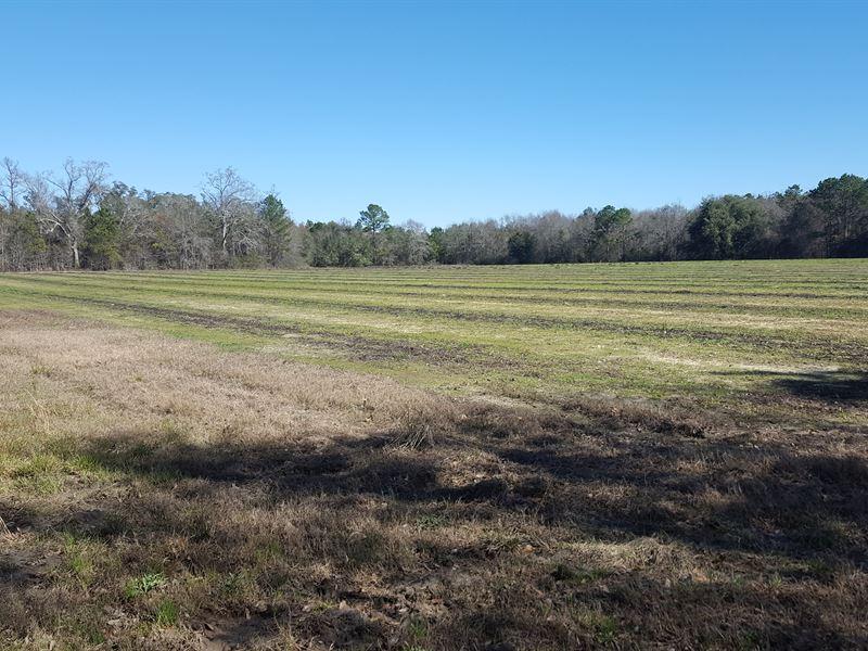 Blue Run Tract : Morgan : Calhoun County : Georgia