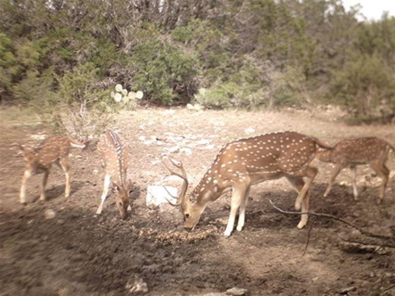 Rocksprings Getaway : Rocksprings : Edwards County : Texas