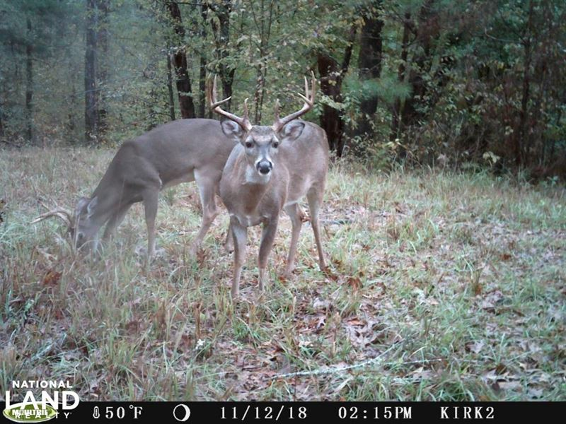 Copiah County Hunting Property : Utica : Copiah County : Mississippi