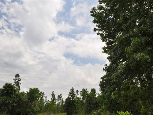 3,132 Ac Tarkington Bayou : Plum Grove : Liberty County : Texas