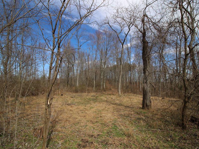 Oh 335 - 81 Acres : Beaver : Pike County : Ohio