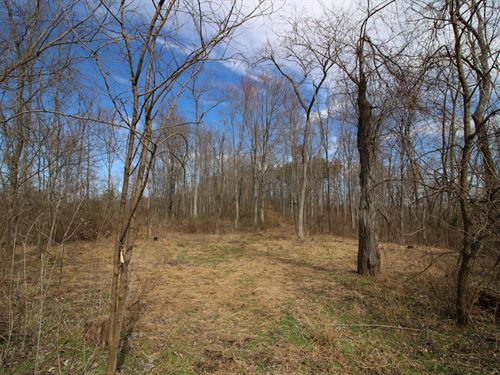 Oh 335 - 81 Acres : Beaver : Pike County : Ohio