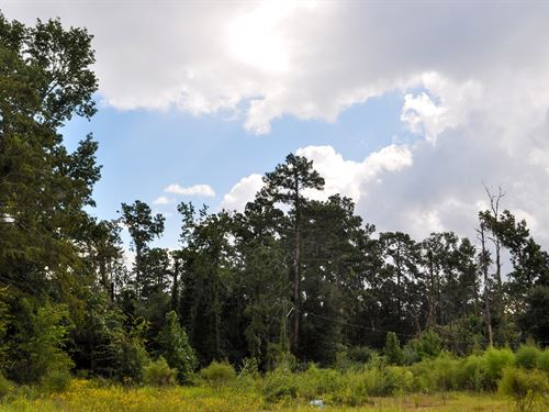 102 Ac Fm 787 Tract 5 : Cleveland : Liberty County : Texas