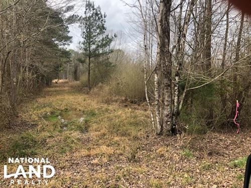 Noxapater 80 Timber Tract : Noxapater : Winston County : Mississippi