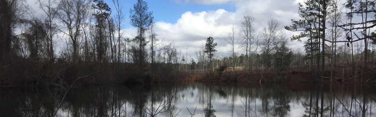 Willoughby Tree Farms Two : Thomaston : Upson County : Georgia