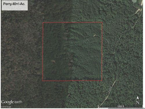 40+/- Ac Timberland : Beaumont : Perry County : Mississippi