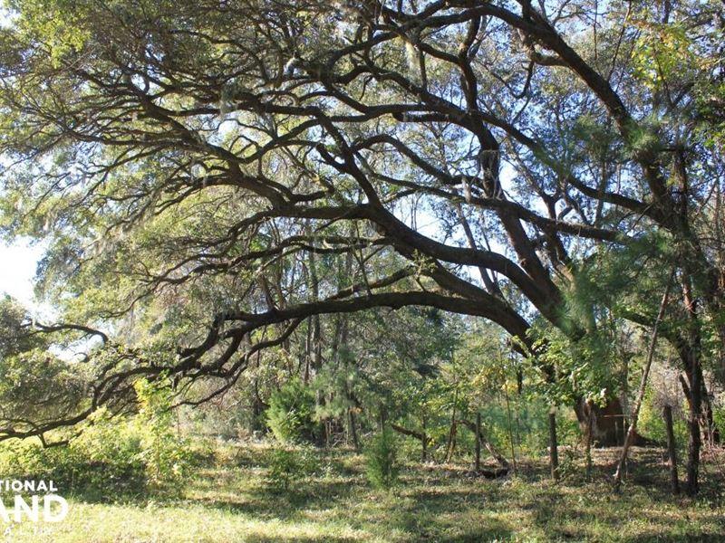Johns Island Farm & Equestrian Acre : Charleston : Charleston County : South Carolina