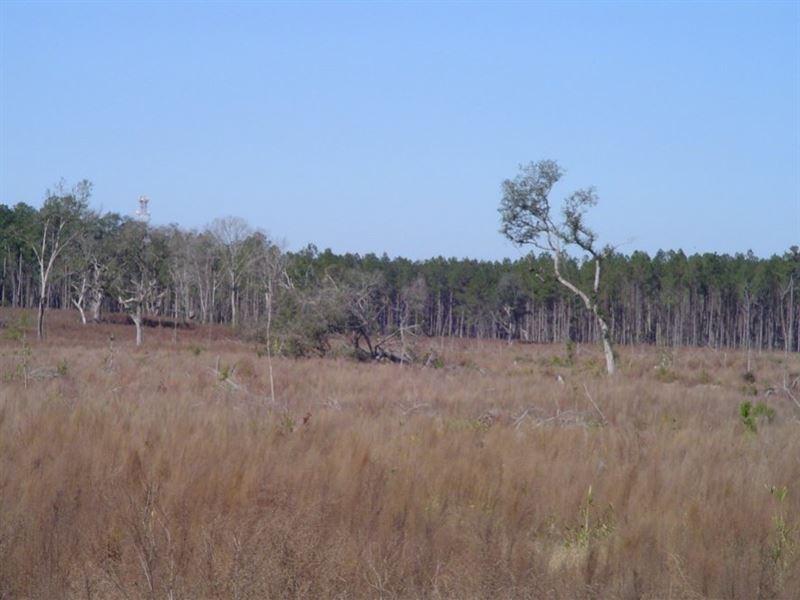 Ravenwood Plantation 1 : Charleston : Dorchester County : South Carolina