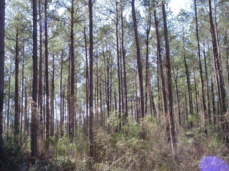 Ravenwood Plantation 2 : Charleston : Dorchester County : South Carolina