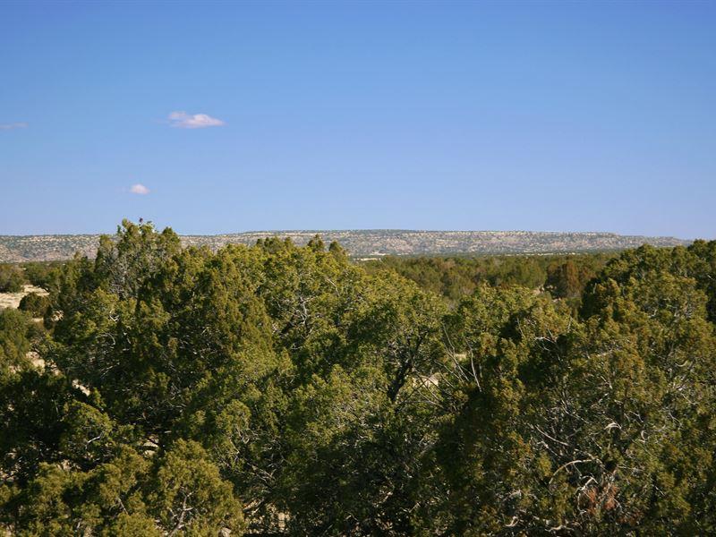 Remote Arizona Ranch $237 Month : Saint Johns : Apache County : Arizona