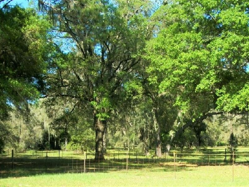 10 Acs In State Forest Home Barns : Brooksville : Hernando County : Florida
