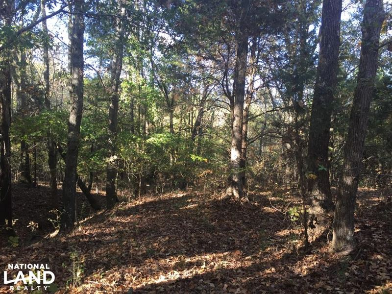 Recreational, Timberland, Homesite : Pontotoc : Pontotoc County : Mississippi