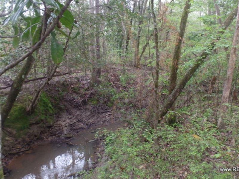20 Ac - Timberland For Rural Home : Ragley : Allen Parish : Louisiana