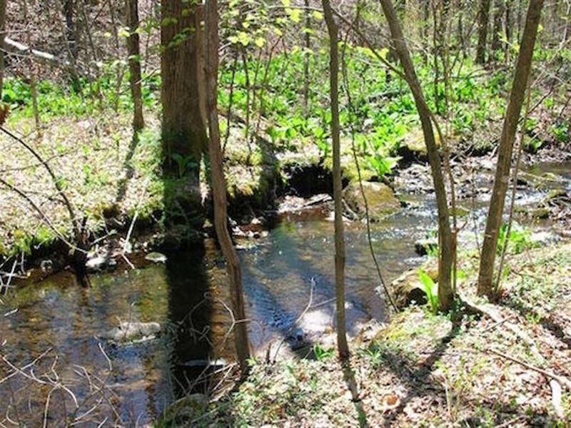 20 Ac. California Miningclaim Creek : Weaverville : Trinity County : California