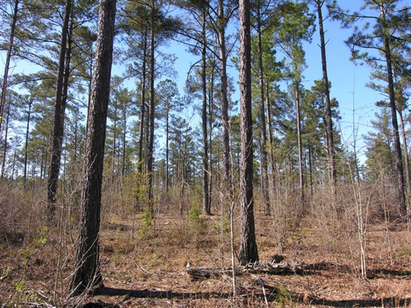 27.81 Acres Wooded, Old Pine Trees : Gibson : Glascock County : Georgia