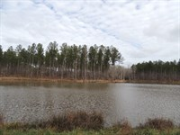 153.89 Ac On Terrell Road : Greenville : Meriwether County : Georgia