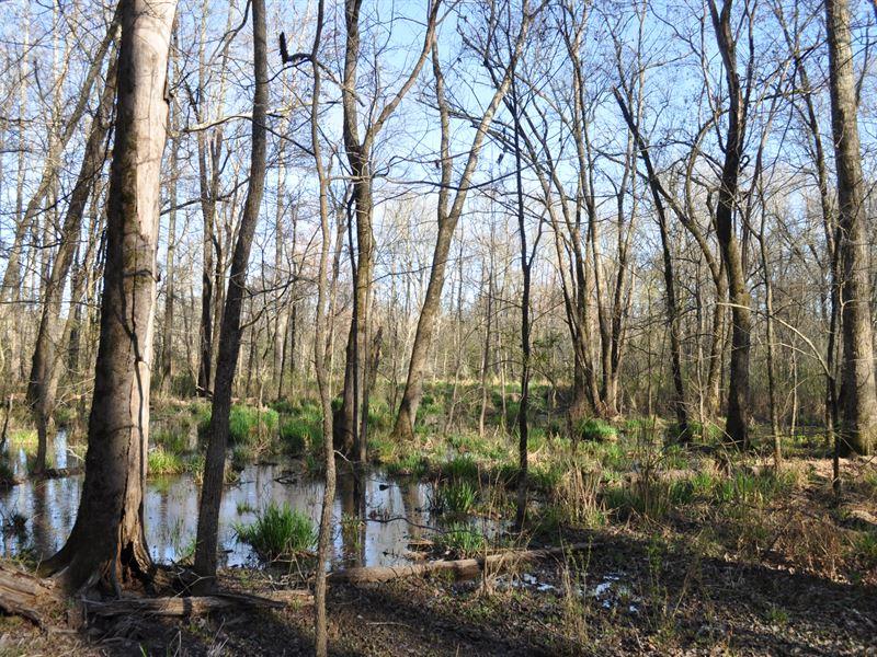 Quack Tract : Lexington : Oglethorpe County : Georgia