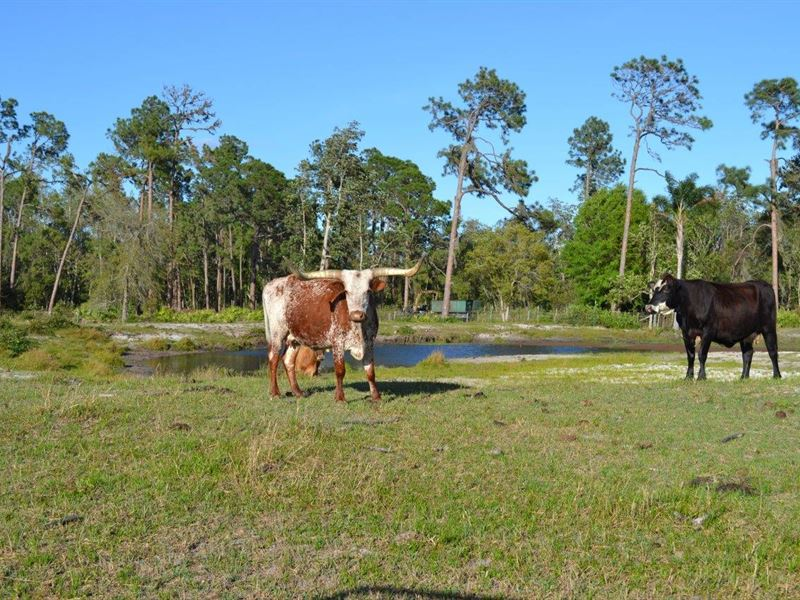 Frostproof Ranch : Frostproof : Polk County : Florida